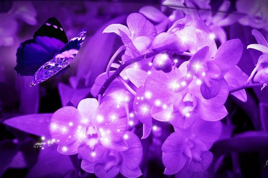 красивые фото в фиолетовом цвете концу