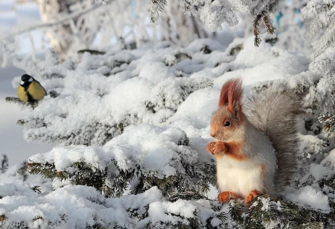 картинки животных в зимнее время года