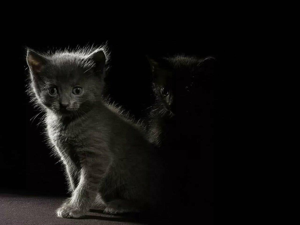черный и белый котята на столе картинка чем