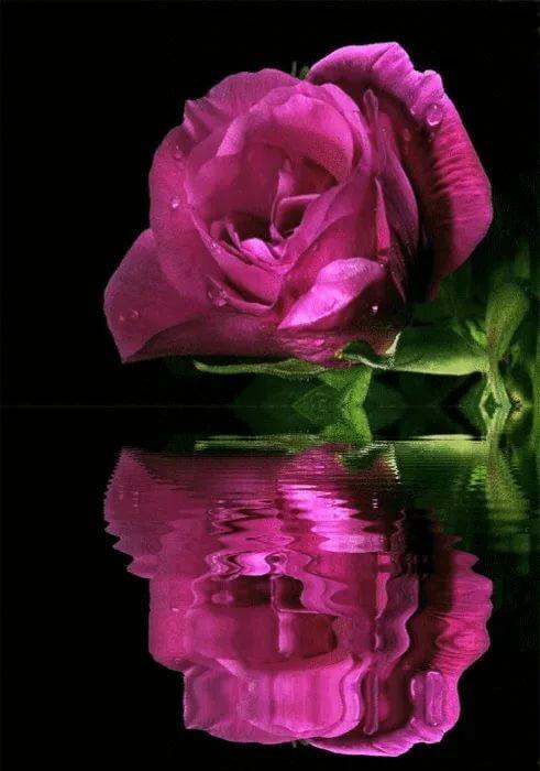 совмещенных гифка красивый цветок изготовьте