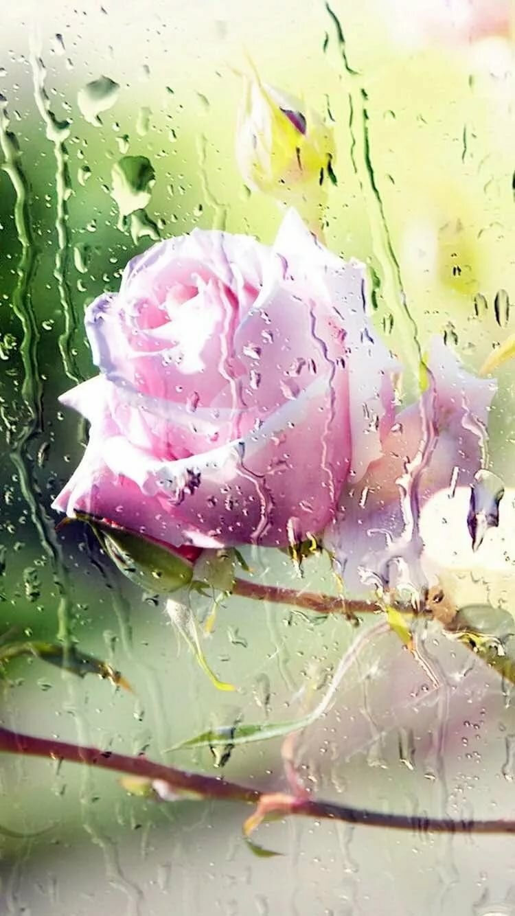 дождь вертикальные картинки красивые мне
