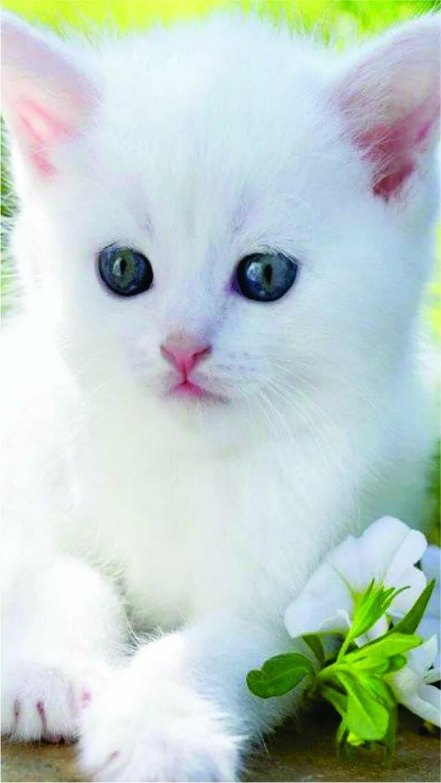 Картинки анимация кошек на телефон, картинки