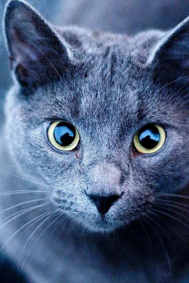 Картинки котов на заставку телефона