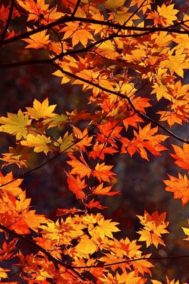 Картинки на телефон осень красивые, картинки про