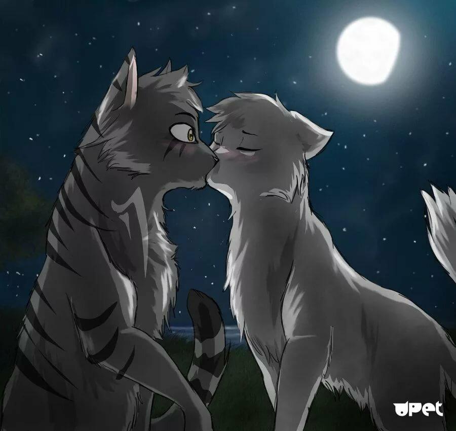 красивые картинки коты воители пары уиллис воссоединился женой