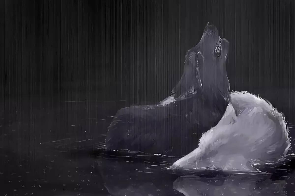 Мультяшный волк картинки