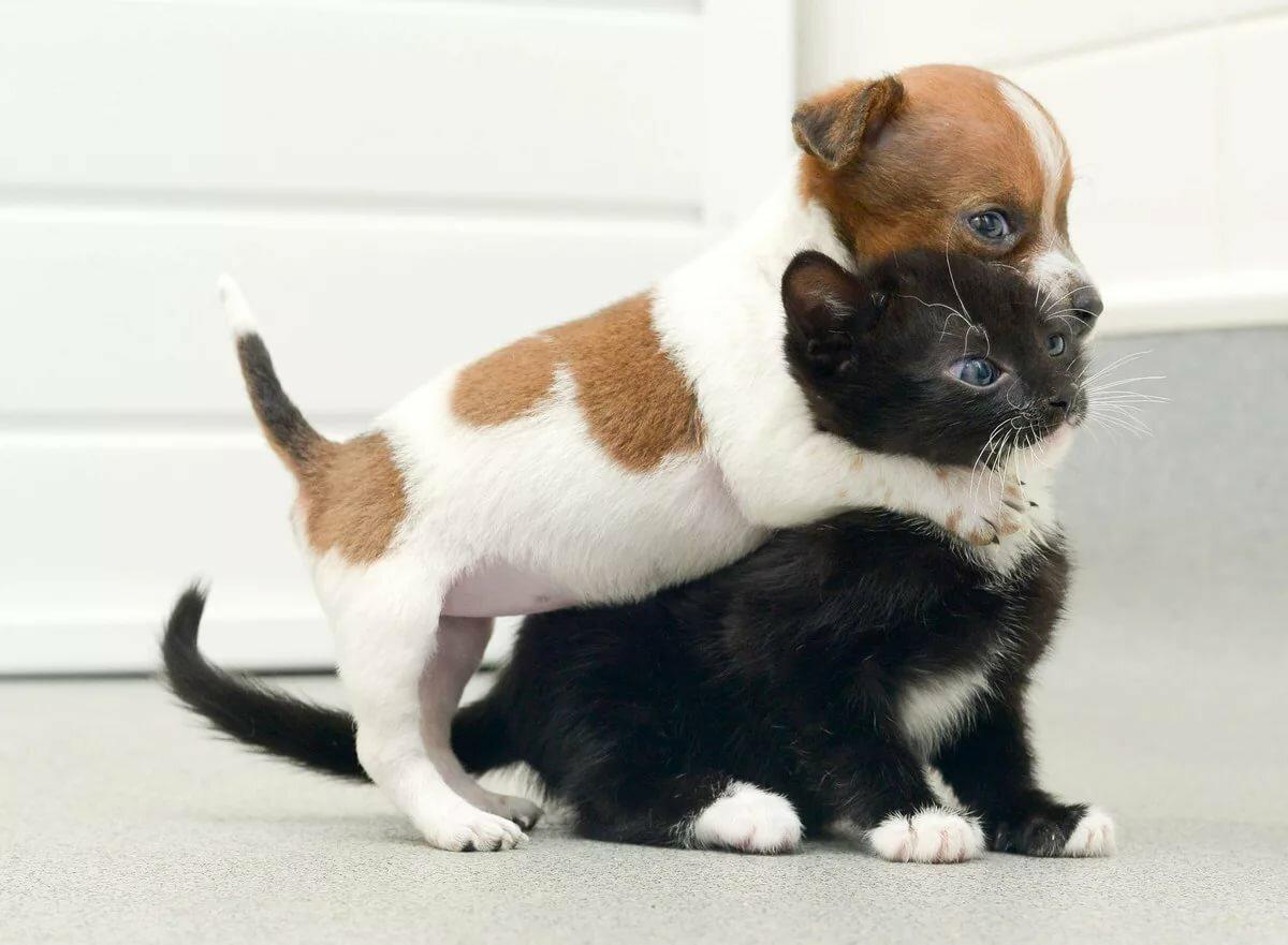 Картинки, смешные картинки щенят и котят