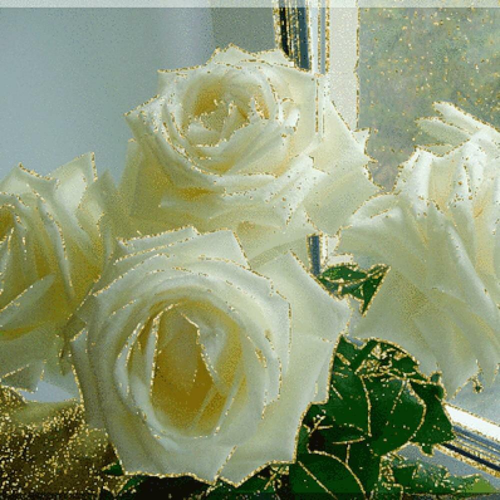 Открытки, открытка белые розы анимация