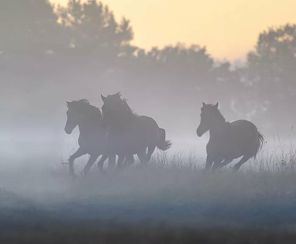 Картинки лошади в тумане