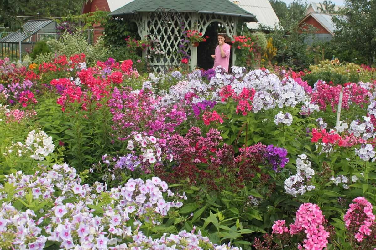 Самые популярные цветы для дачи с фото стараются