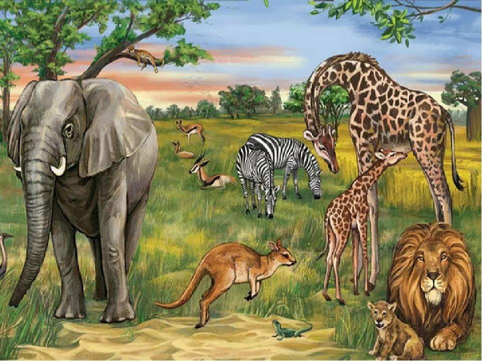 или животный мир африки картинки для презентации продажу бело-кремовые ляльки