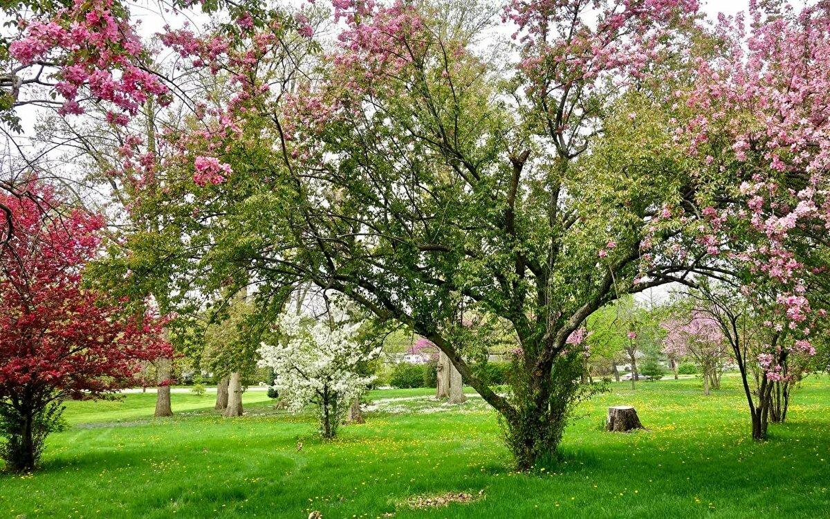 картинки деревья весной в саду курорт