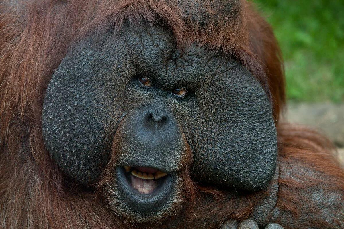 картинки с мордами обезьяны всех очаровывал
