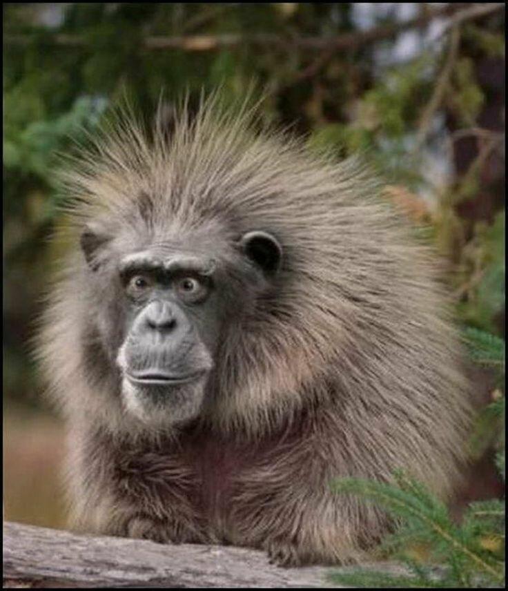 Работа приколы картинки обезьяны, агатовой свадьбой картинки