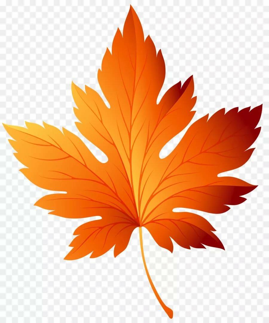 Осенний листик в картинках
