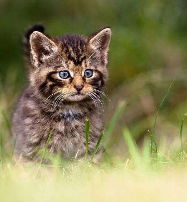 Лесной котенок картинки