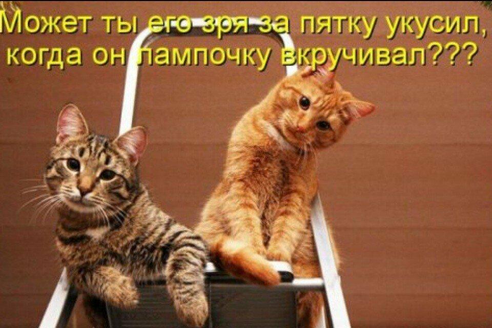 Картинки с приколами и надписями про кошек, открытки любимой