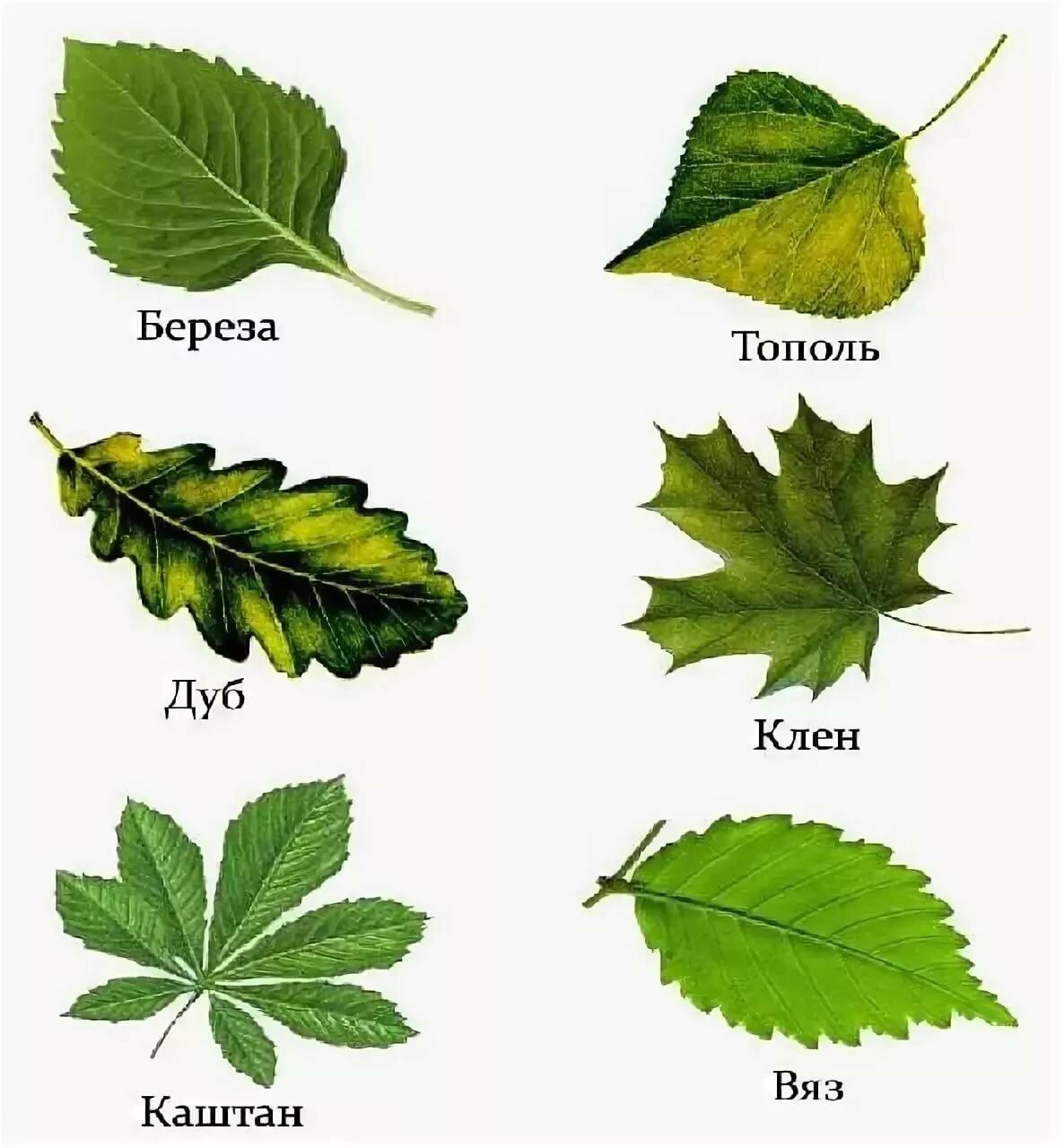 Картинка форма листочками