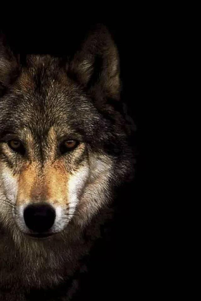 Картинки, картинки с волком и надписями для авы в контакте картинка