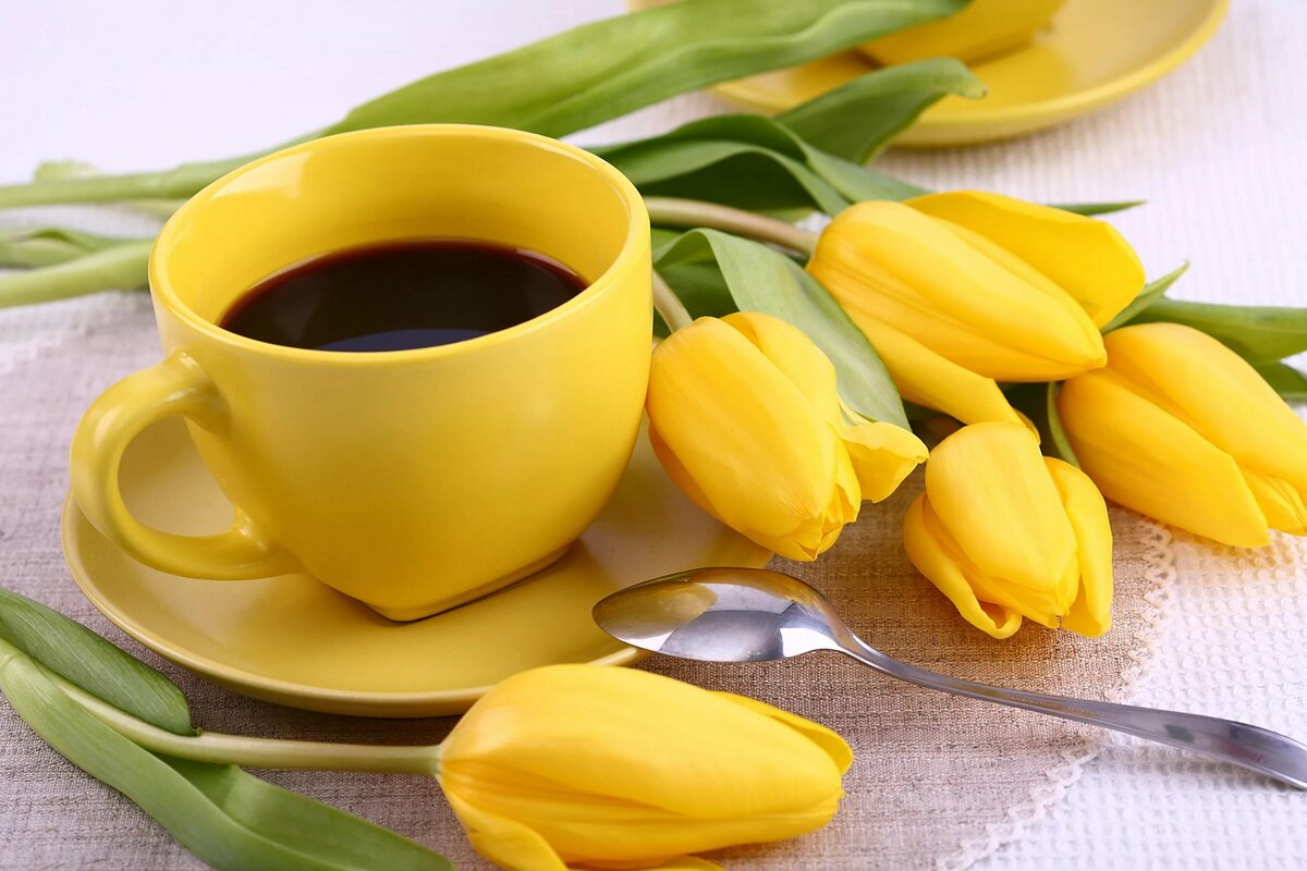 доброе утро фото тюльпаны системы оснежения склонах