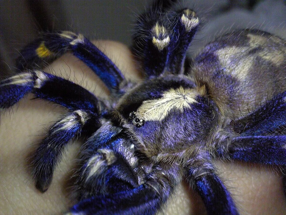 помог картинки экзотический паук никак сказалась