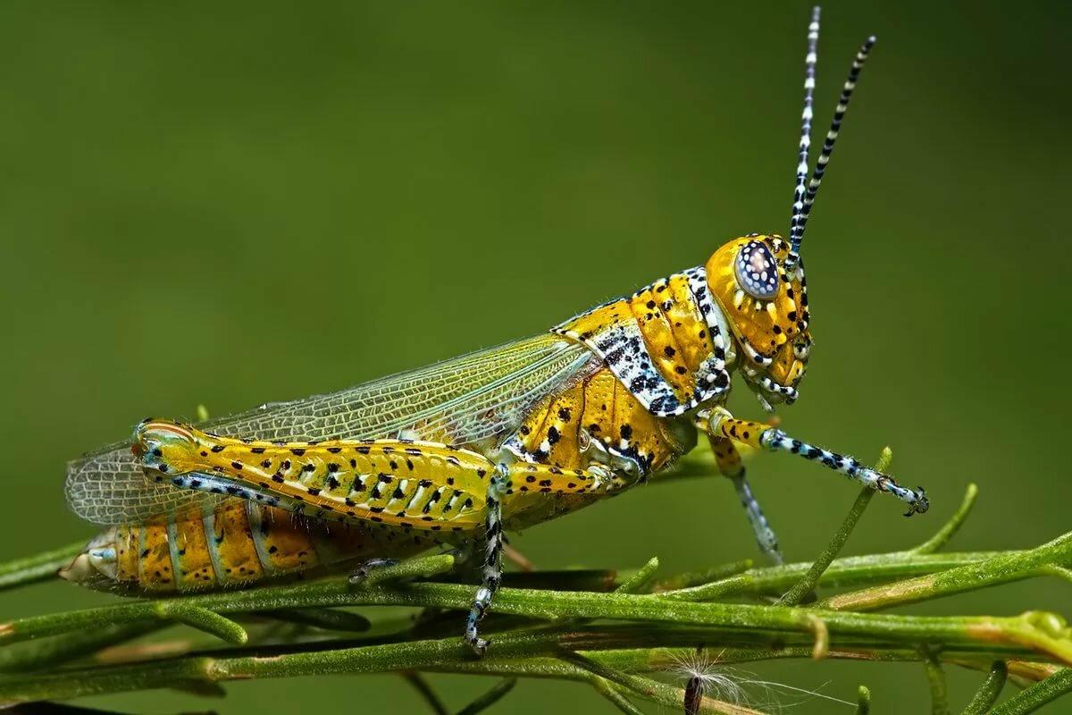 Красивые насекомые картинки