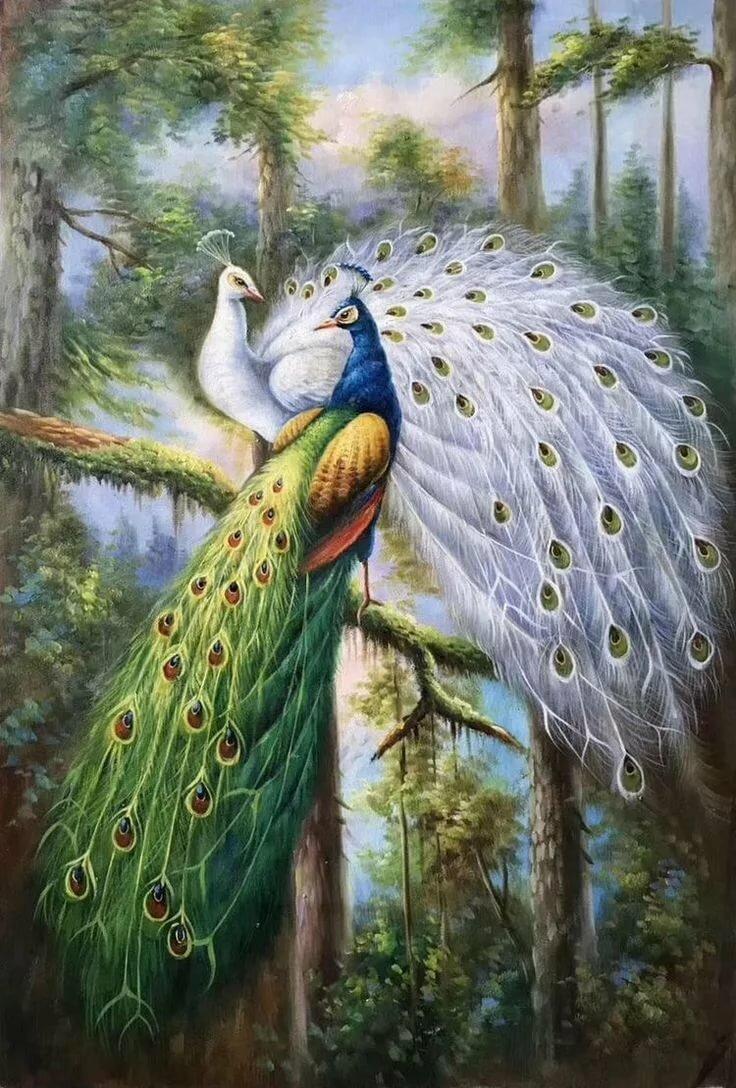 Картинка с птицей софой ночи, под