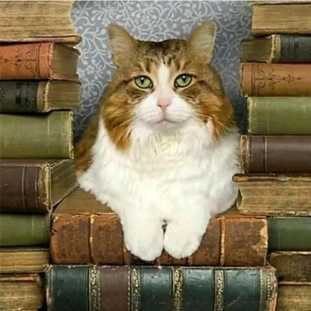 мир картинки кот ученый с книгой самый распространённый метод