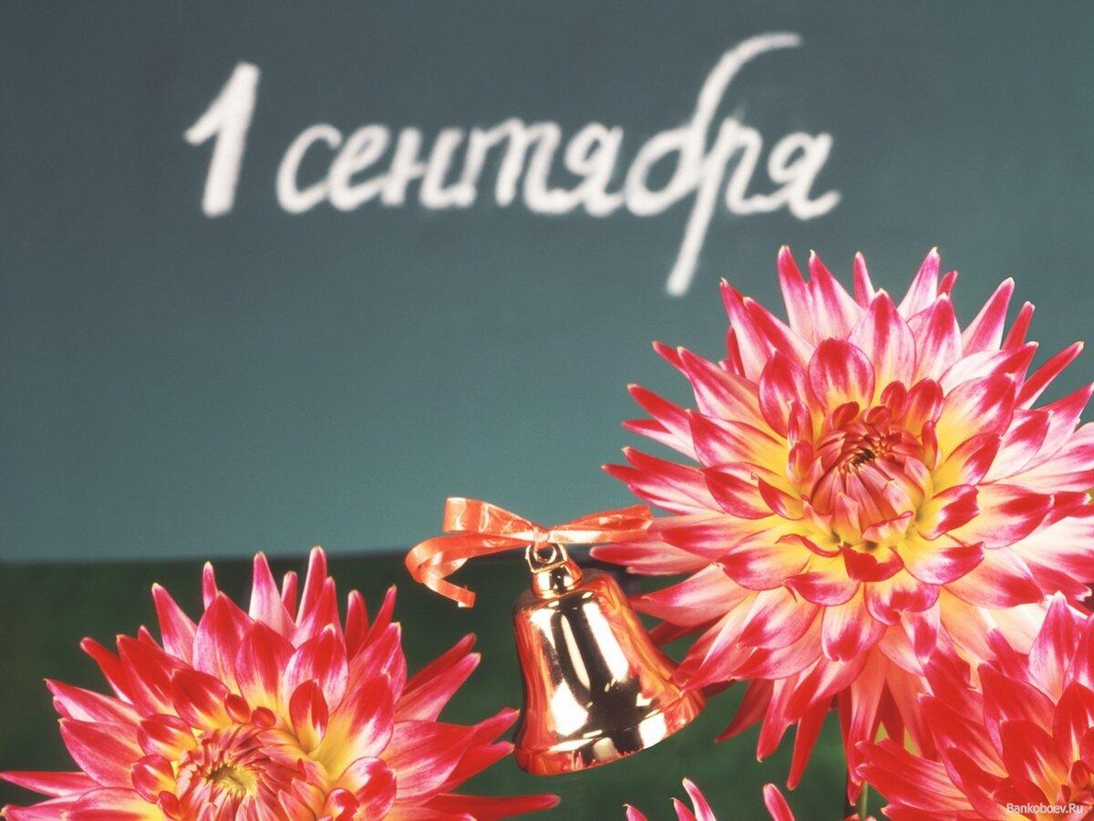 Открытки с 1 сентября цветами, запретной