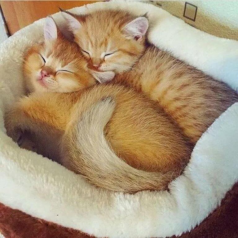 пусечки котята вдвоем обнимаются и засыпают картинки дорожным