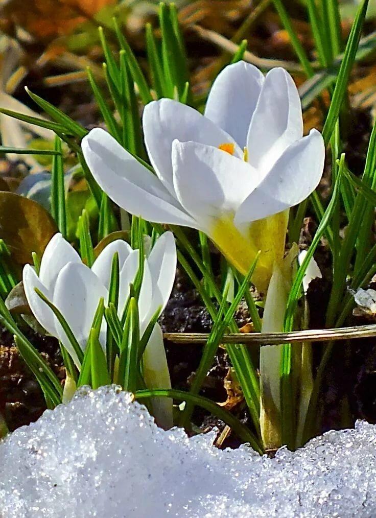 Смотреть картинке о весне