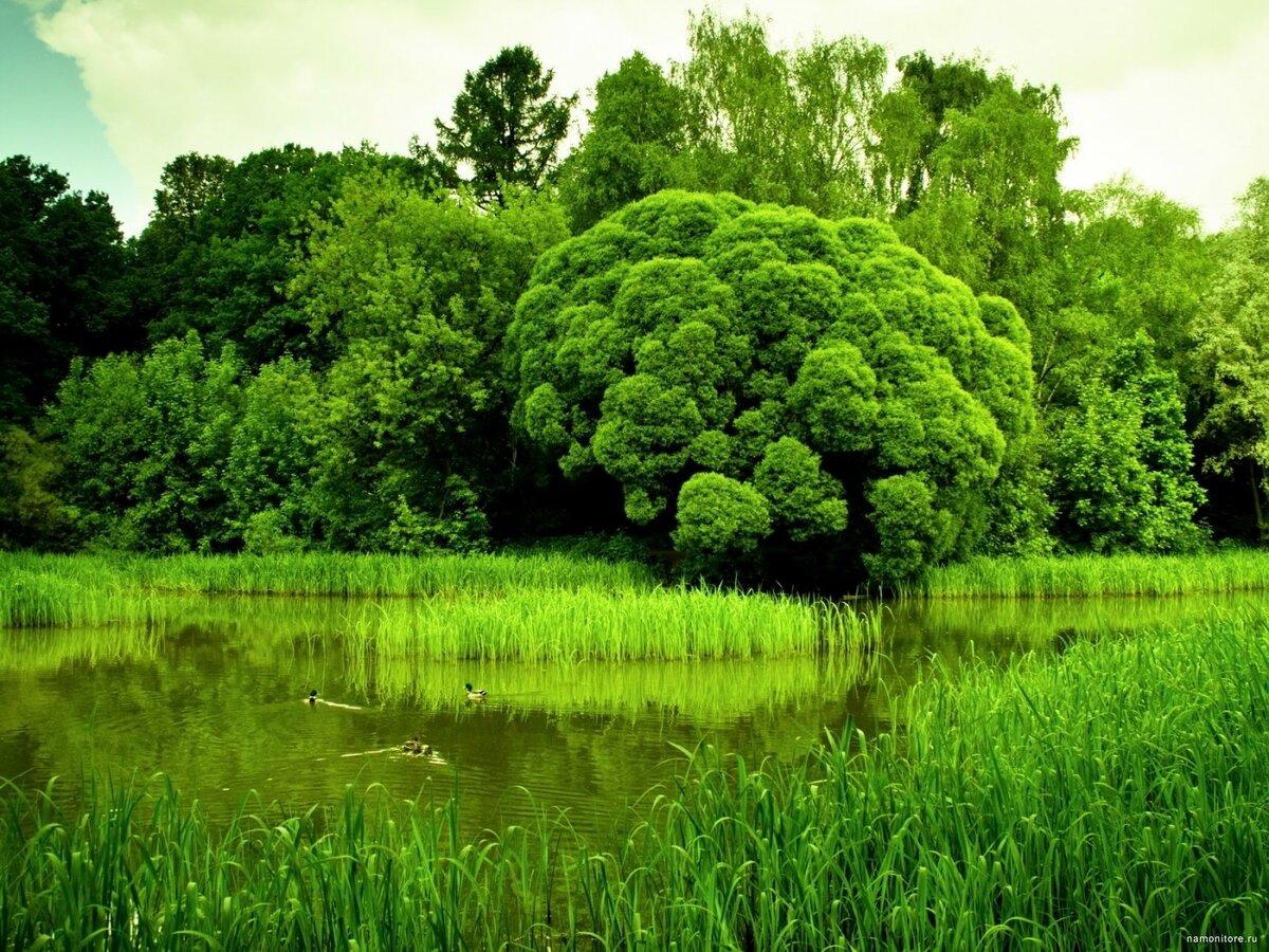 красивые зеленые фотки которые