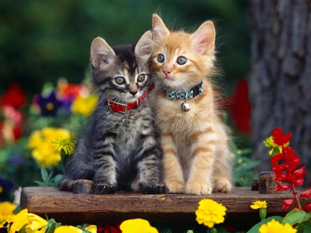 Картинки котят, приколы