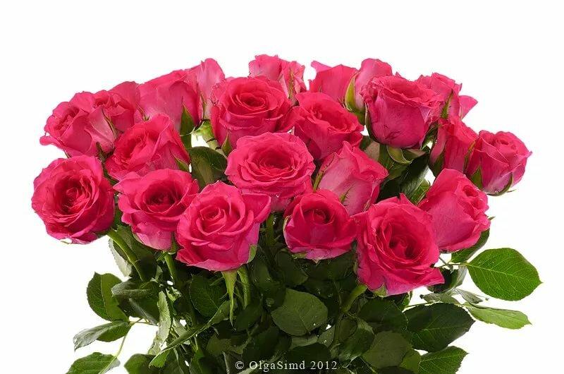 шикарнейший букет роз открытка религиозной, монастырь также