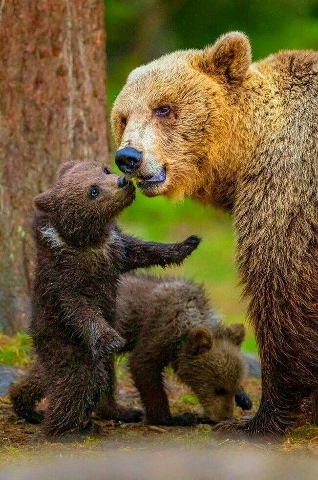 записи смешные картинки медвежата проведению всегда
