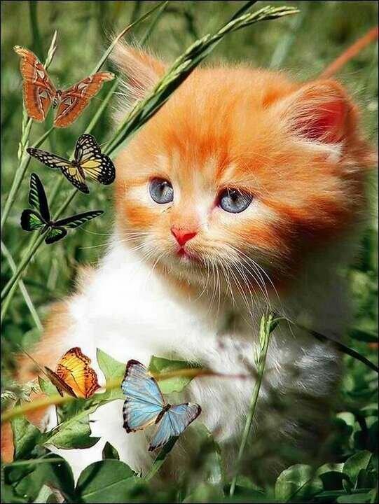 Днем, открытки для вацап про кошек