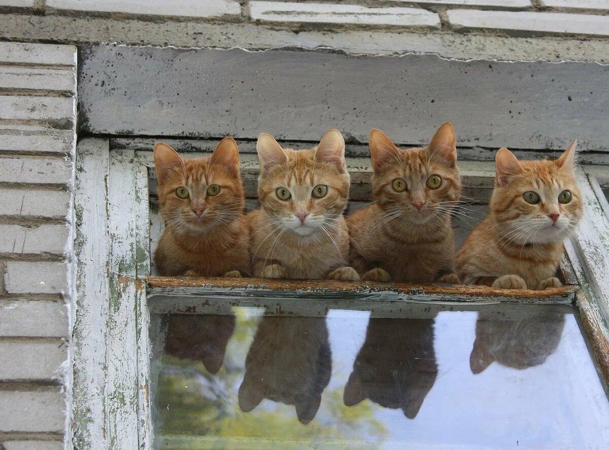 Прикольные картинки с кошками и котами