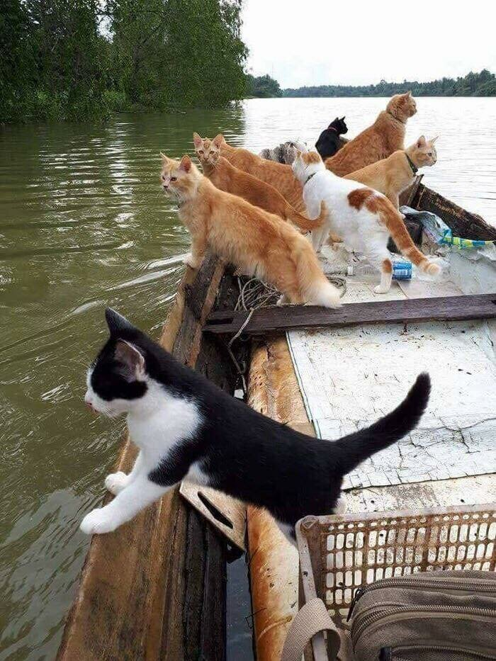 Дед Муррр-зай опять пришел на помощь #кошки #лодка #по_воде #четвероногие #ходят_по_воде #питомцы