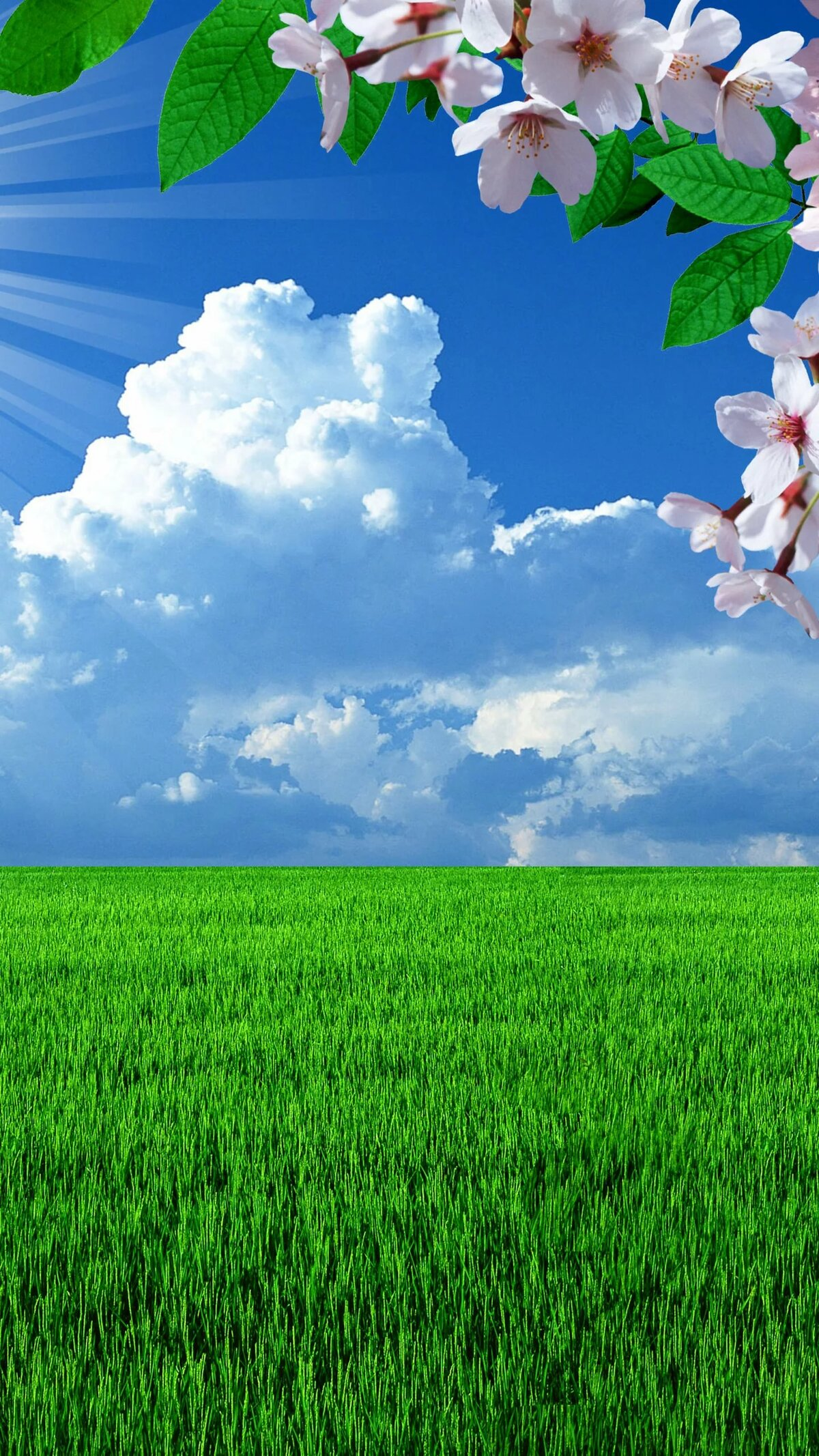 ставил весна картинки на экран телефона добавил вас