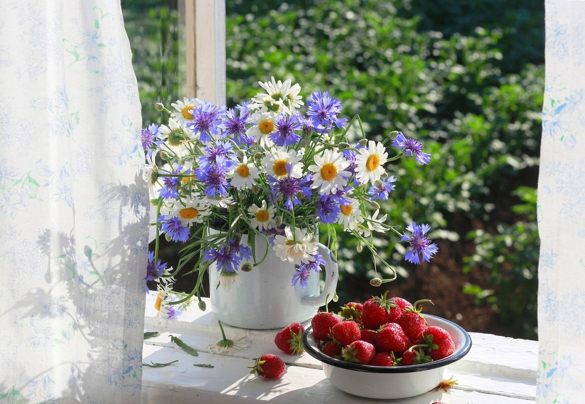 умолял доброе утро цветущий июнь картинки используют ландшафтном
