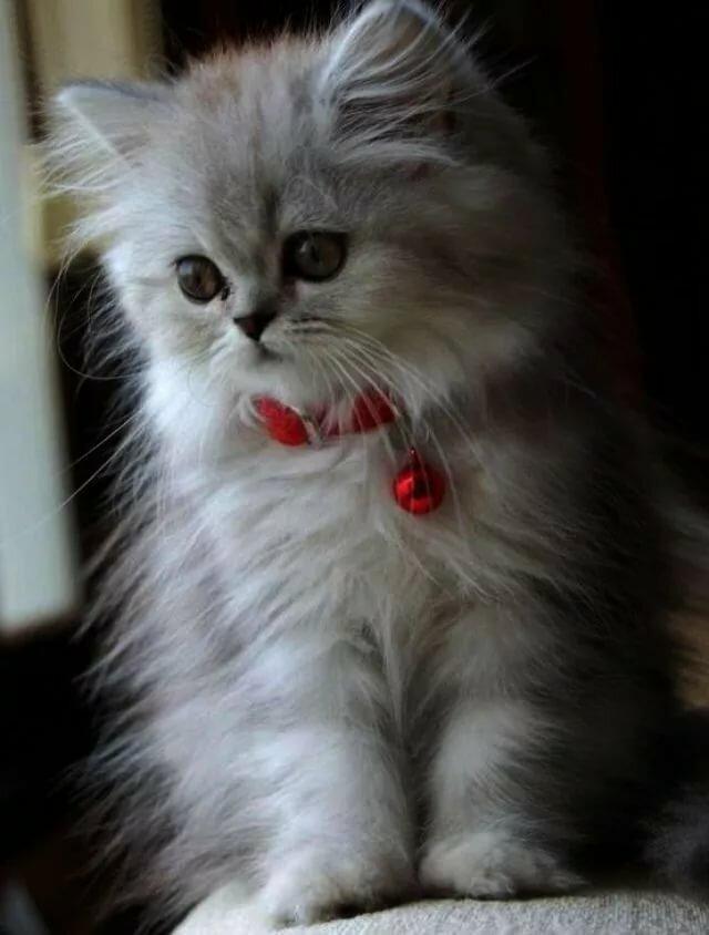 Картинки кошки красивые анимашки
