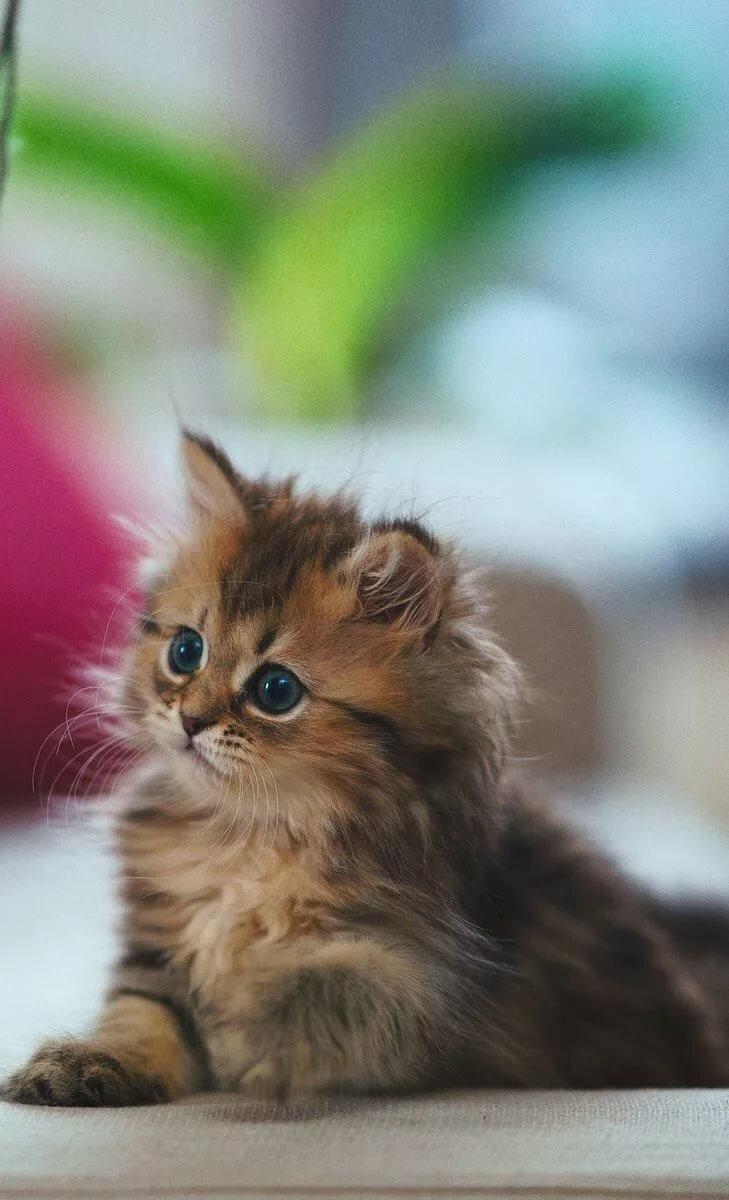 компанию картинки с котятами на смартфон шлакоблочный забор