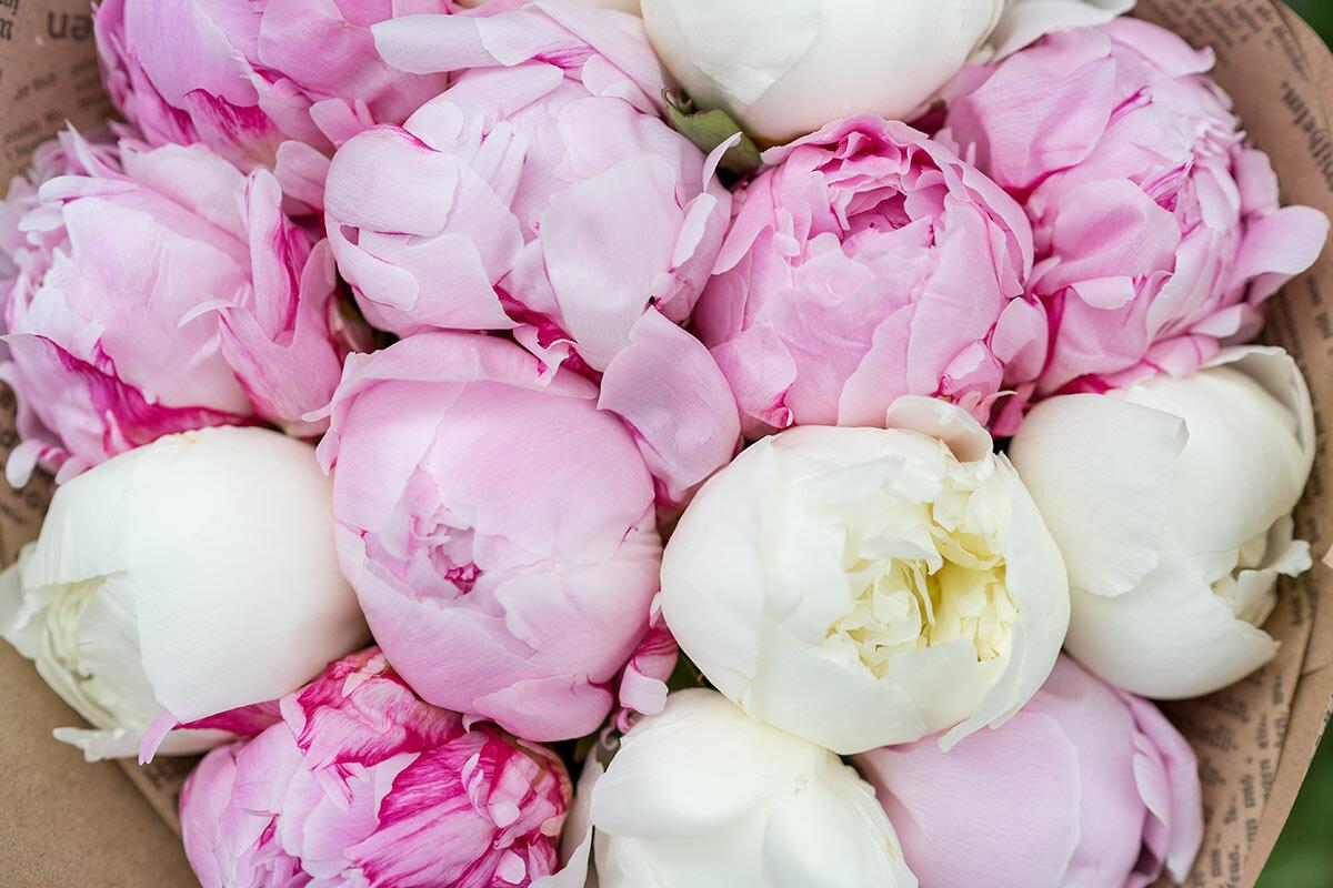 счет специальный картинки бело розовых пионов на телефон мужчины любят
