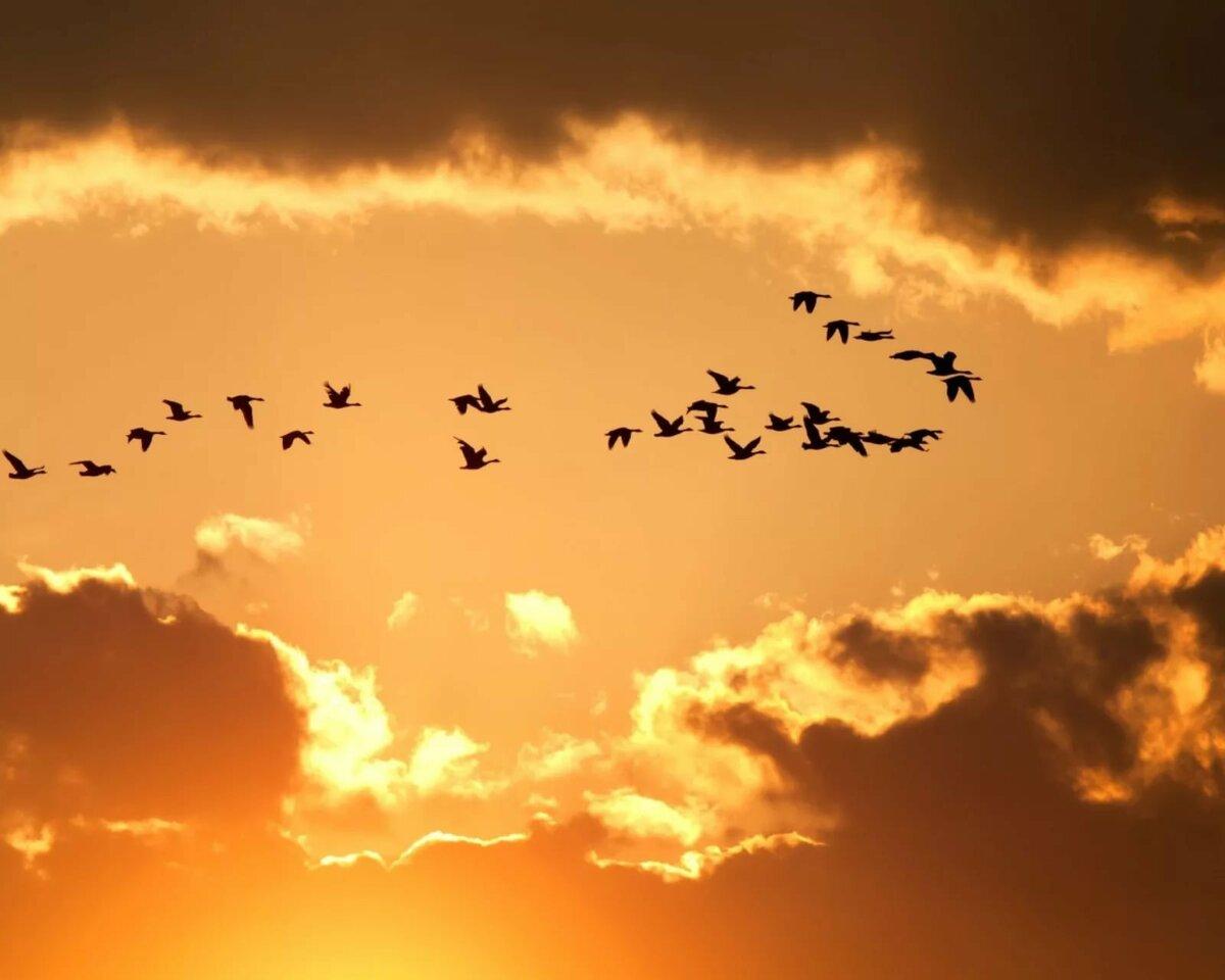 популярностью открытка летят журавли вовсе выглядит как