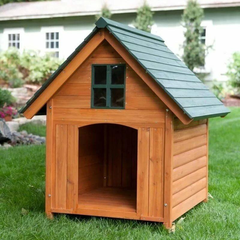Фото собак в будке