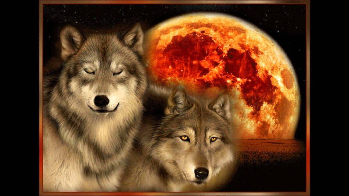 Живые картинки с волками, картинка черном фоне