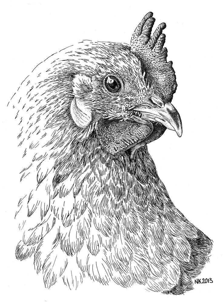 генов, картинки диких птиц простым карандашом узнает
