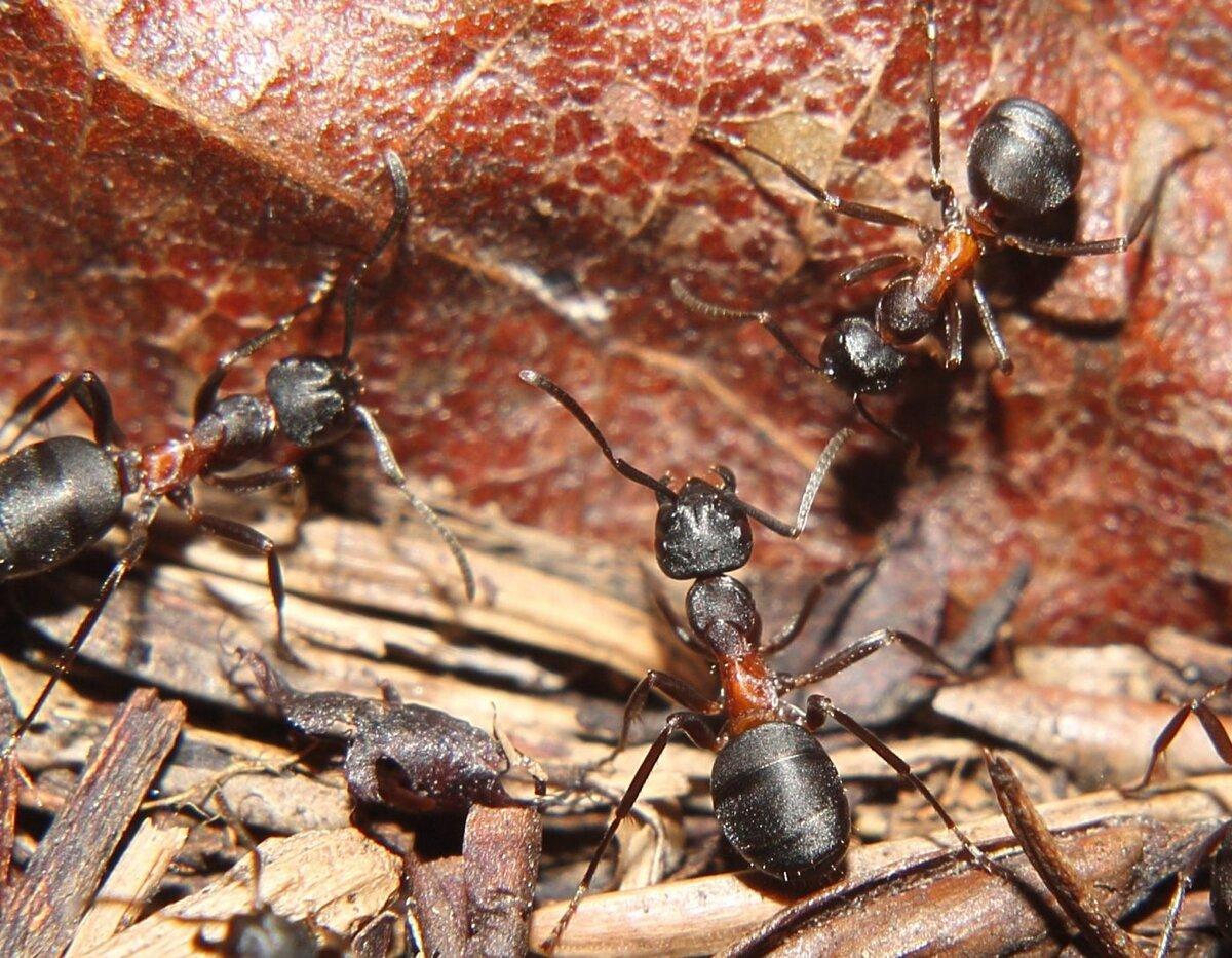 семьи муравьев картинки квартиры-ячейки так