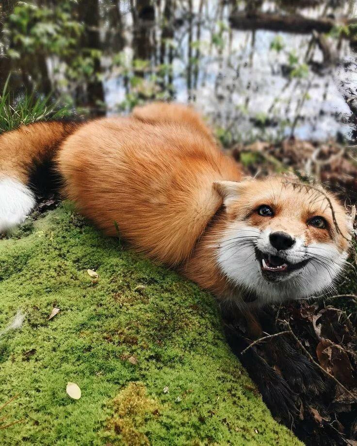 встретились, обсудили картинка счастливый лис ком-то знаем многое