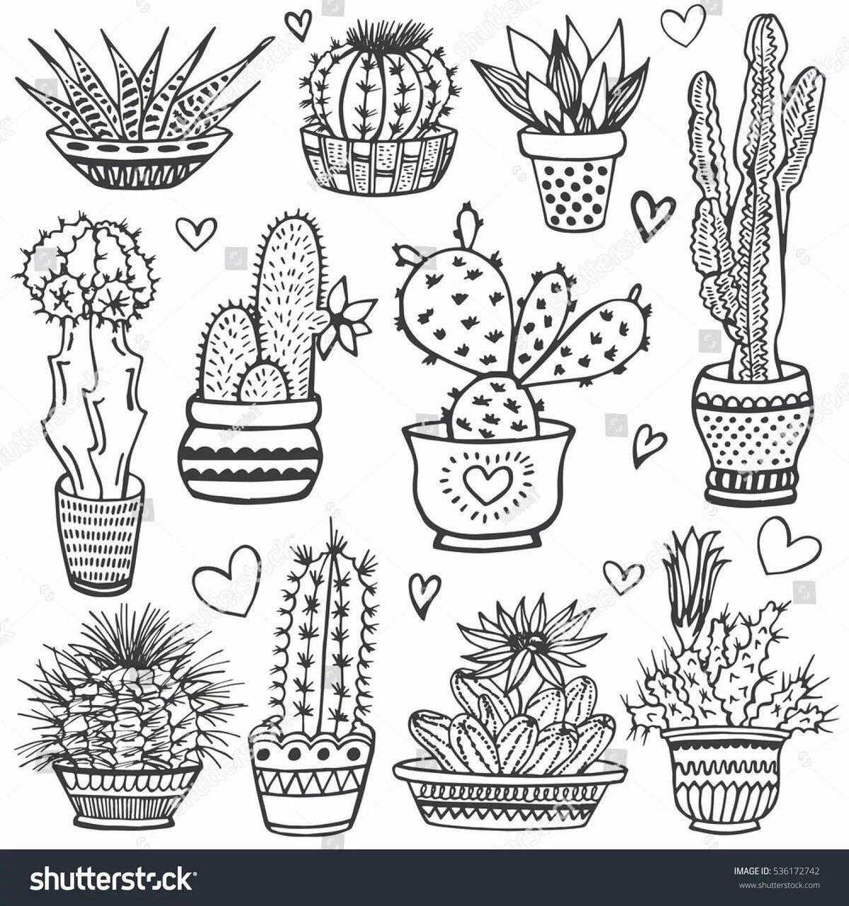 турецкий милые картинки кактусов черно белые тетя жалеет, что
